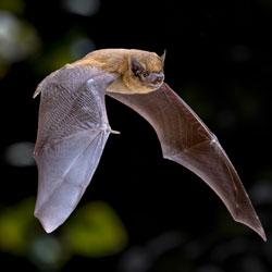 Mehr über Fledermäuse