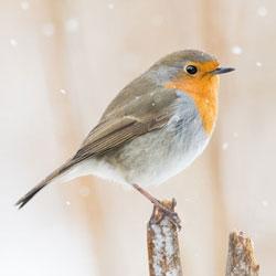 Mehr über Vögel