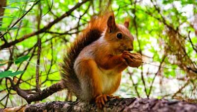 Eichhörnchen füttern mit Nüssen