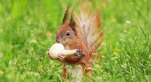 Eichhörnchen füttern richtig