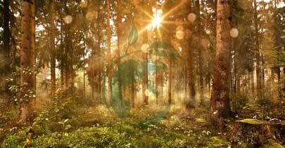 Erdenfreund Umweltmission mehr Umweltbewusstsein