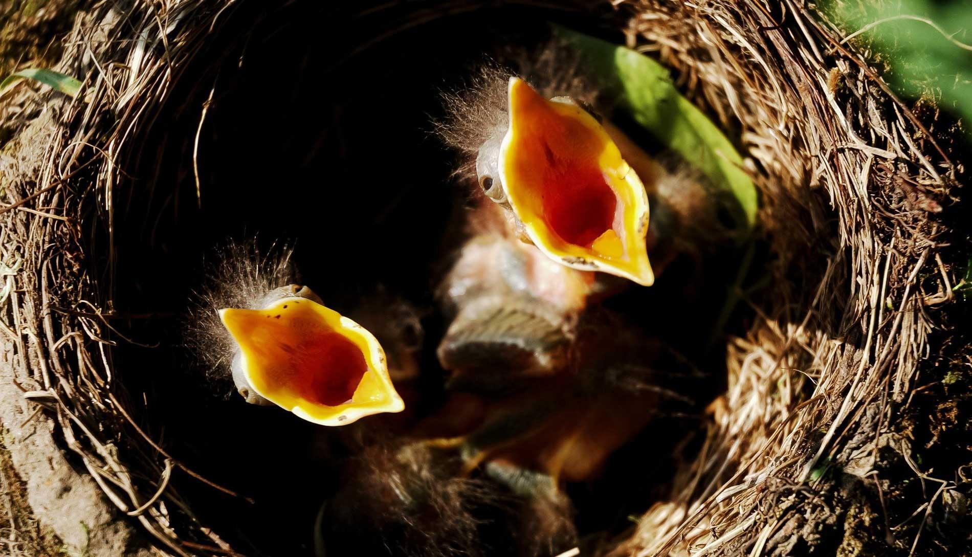 Vögel nisten Nistmöglichkeiten