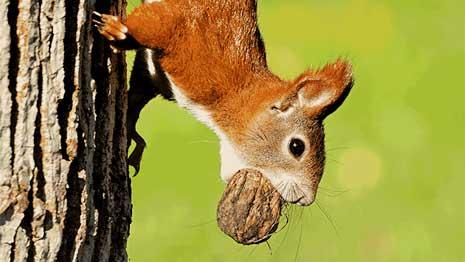 Eichhörnchen Futterkasten Eichhörnchen Futterhaus Erdenfreund