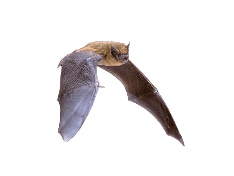 Fledermaushaus