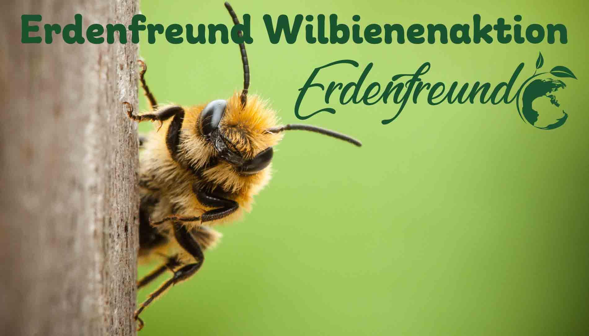 Wildbienenaktion