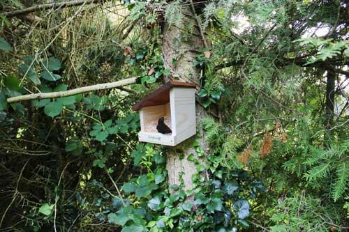 Vogelhaus kaufen und aufhängen